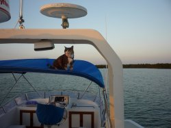 Goldie on the bimini